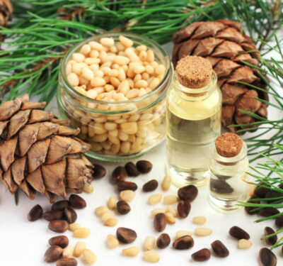 Cedar nut oil in bottles, pine cones and green boughs, seeds in jar and scattered on table. Natural holistic remedy for food and cosmetic use.